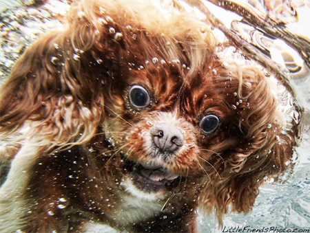 Seth Casteel Underwater Dog Photography