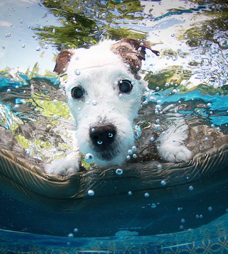 Dogs Can Swim
