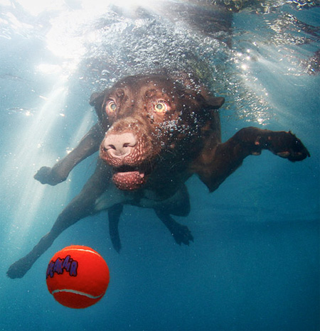 Diving Dogs by Seth Casteel