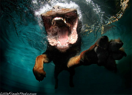 Swimming Dogs by Seth Casteel