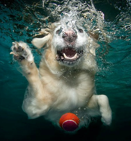 Underwater Dogs Pictures