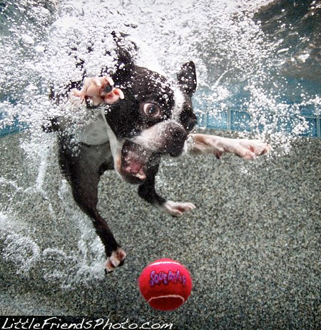 Swimming Dogs Photos