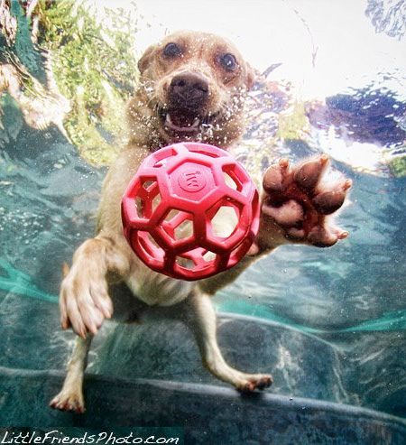 Diving Dogs Photos