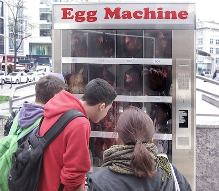 Chicken in Vending Machine