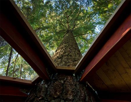 Egg Inspired Tree House