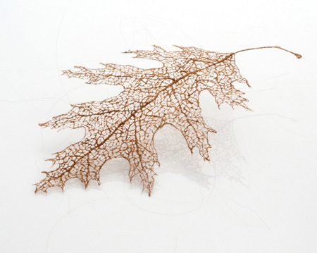 Human Hair Leaf