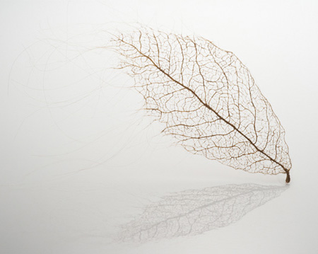Hair Leaves