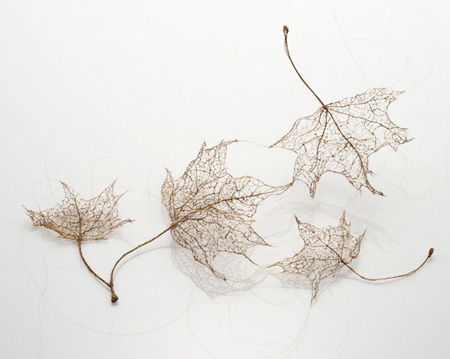 Human Hair Leaves by Jenine Shereos