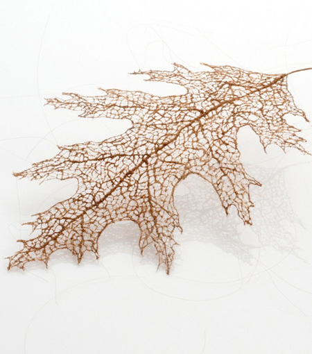 Leaf Made of Human Hair