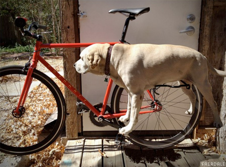 Dograck For Your Bicycle