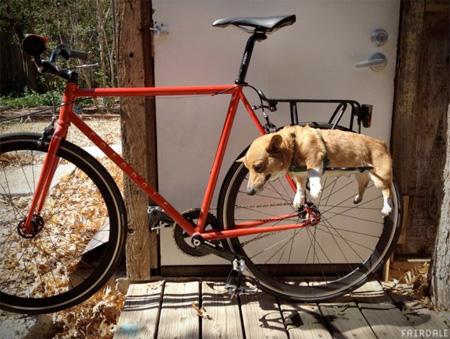 Dog Rack