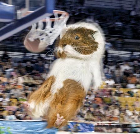 Guinea Pig Olympics Calendar