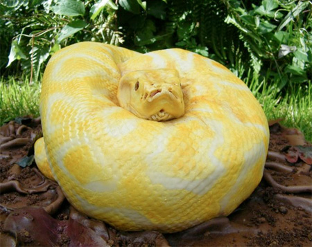 Realistic Snake Cake by North Star Cakes