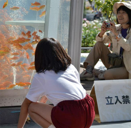 Telephone Booth Aquariums in Japan