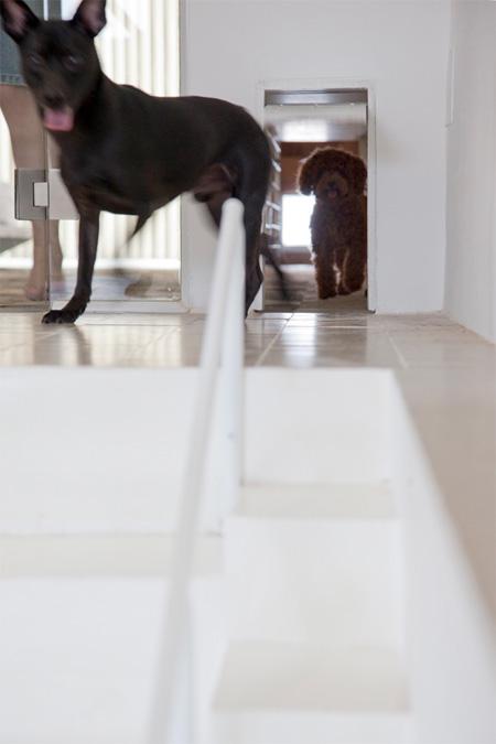Dog Staircase