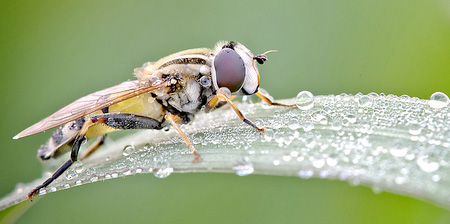 Water Droplets on Insects