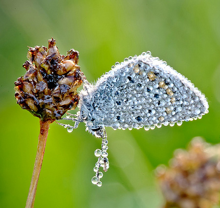 Macro Photography by David Chambon