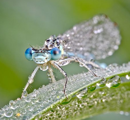 Insects Covered in Water