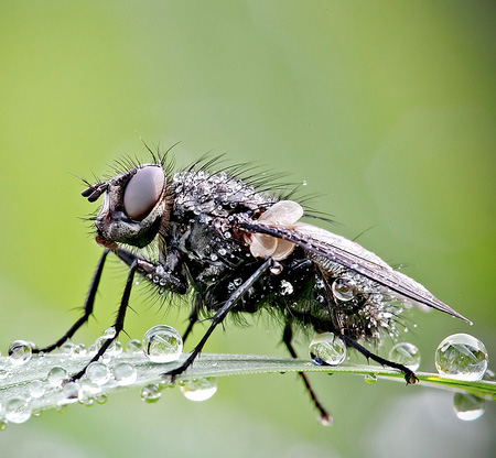 Insects Covered in Water Drops