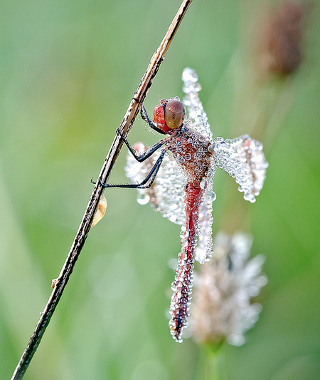 Insects Covered in Water Droplets