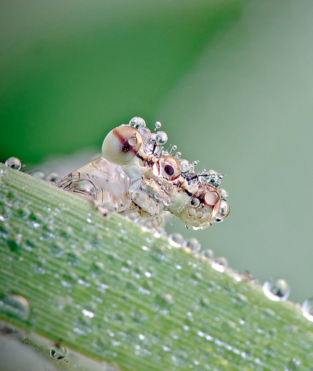 Insects Covered with Water Drops