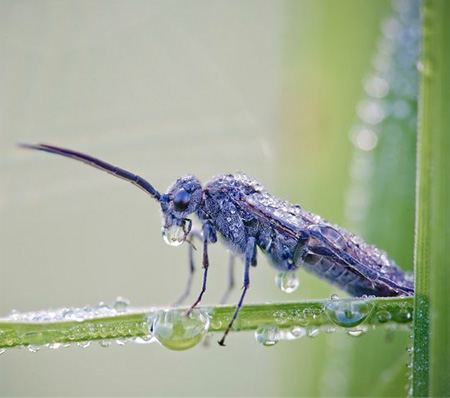 Insects Covered with Water Droplets