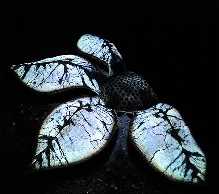 Leaf Art by Sylvain Meyer