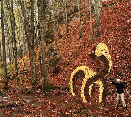 Nature Art by Sylvain Meyer