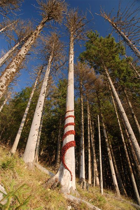 Tree Art by Sylvain Meyer