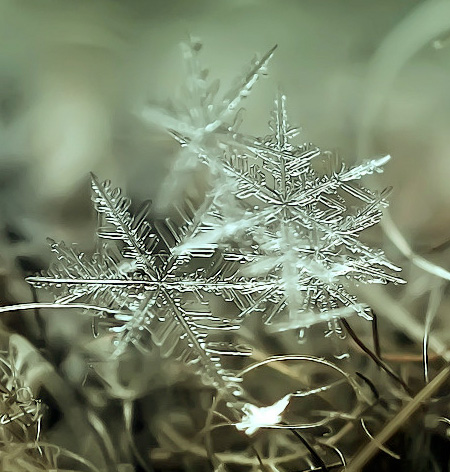 Snowflakes Photography