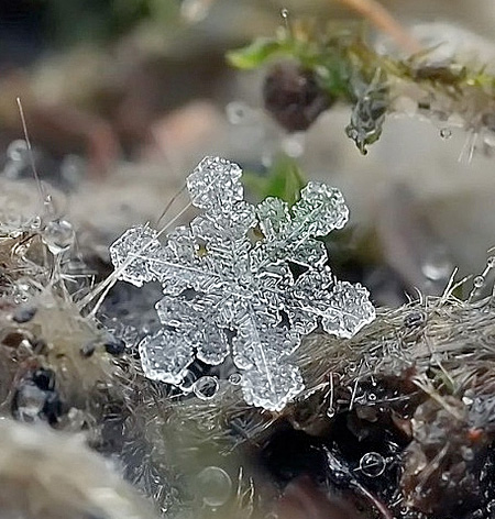 Snowflake Photography
