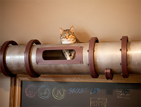 Tube for Cats