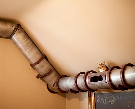 Cat Tubes
