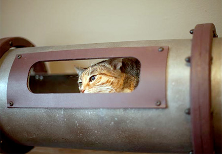 Indoor Cat Tunnel