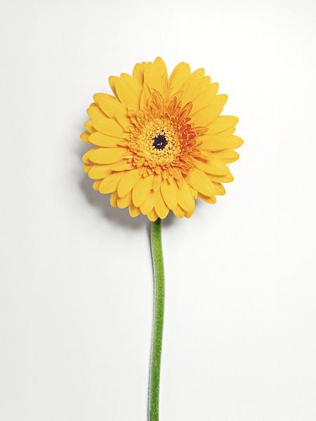 Shattering Flowers