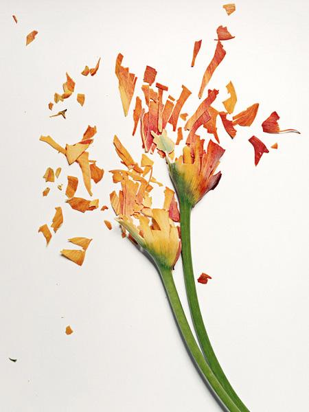 Shattering Flower