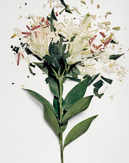 Smashed Flowers by Jon Shireman
