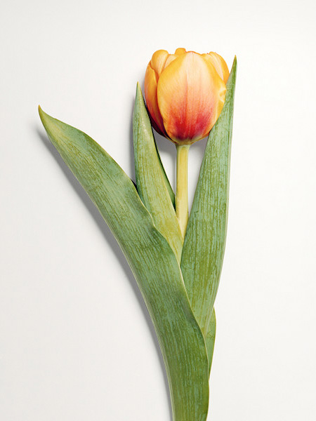 Shattered Flowers by Jon Shireman