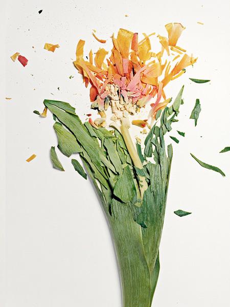 Flowers by Jon Shireman
