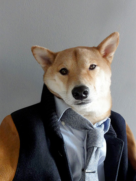 Dog in Clothing