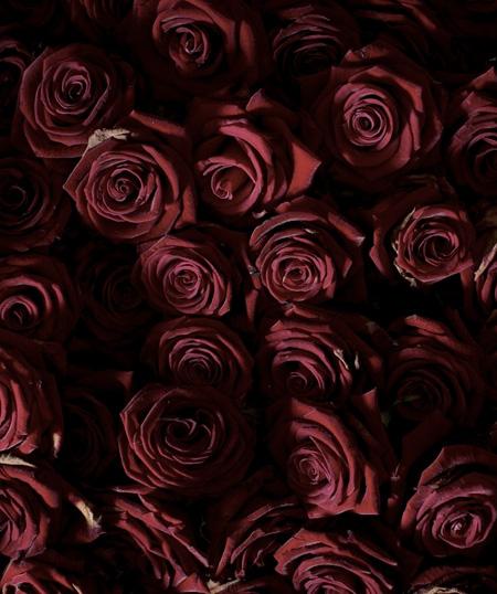 Roses by Anya Gallaccio