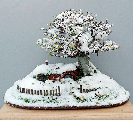 Hobbit House Bonsai Tree