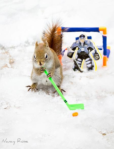 Creative Photos of a Squirrel