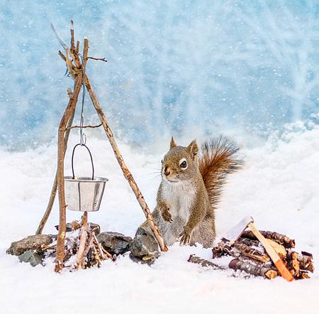 Photos of a Squirrel