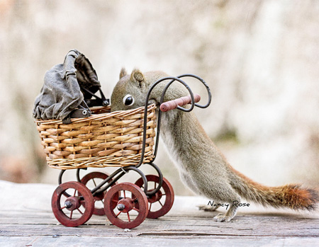 Creative Squirrel Photography