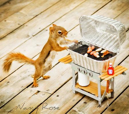 Backyard Squirrels