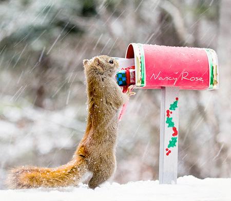 Squirrels by Nancy Rose