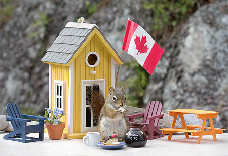 Canadian Squirrels