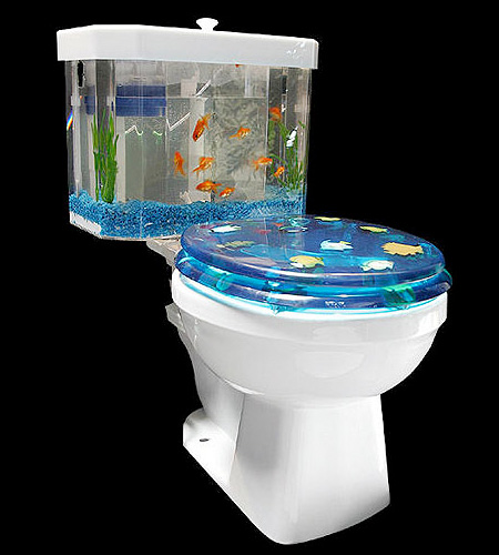 toilet aquarium On toilet fish tank