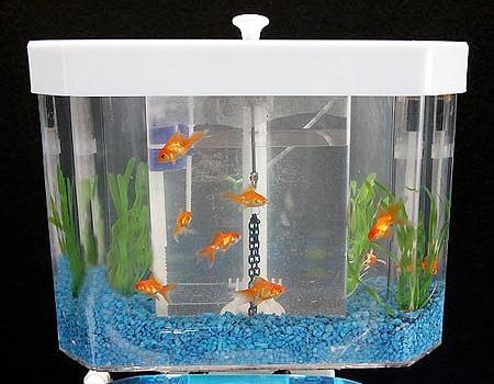 Fish n Flush Toilet Aquarium